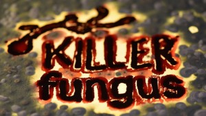 Killer Fungus